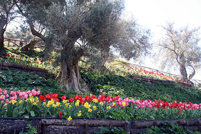 collina dei tulipani