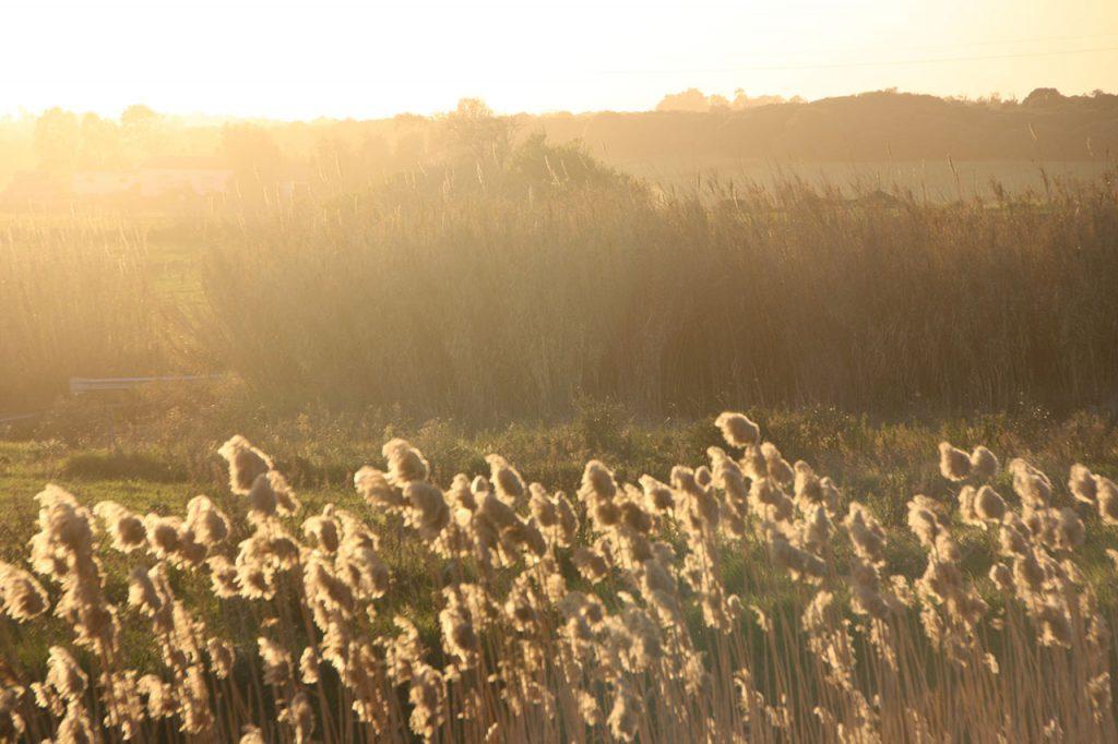 la pianura del medio campidano al tramonto