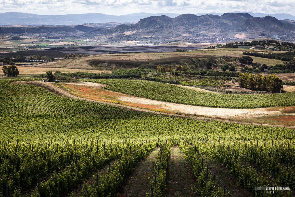 vigneto uva bianca vermentino del medio campidano